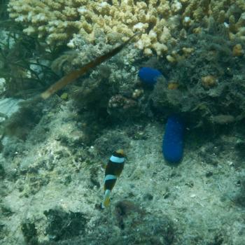 Zeeslak en Nemo!