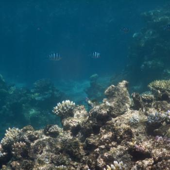 The Open Reef