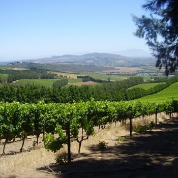 Delheim winefarm