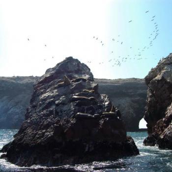 Vogel hemel, nationaal park bij Paracas