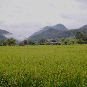 Onverwachts rijstveld