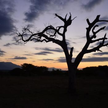 Traditionele 'sundowner' in Kruger National Park