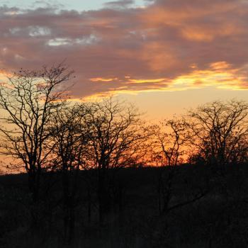 Zonsondergang in Kruger Park