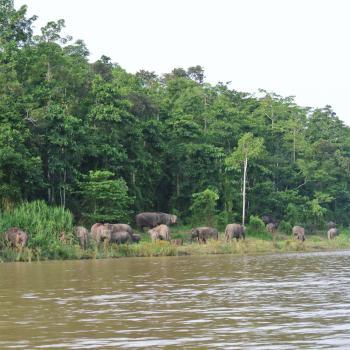 kinabantangan rivier