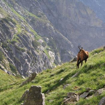 Wildlife in het Tatra gebergte
