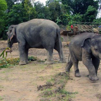 Elephant Retirement Park bij Chiang Mai