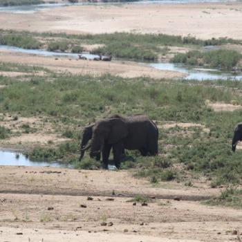 Aan olifanten geen gebrek in mooie omgeving