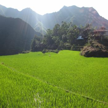 Banaue rijstterrassen