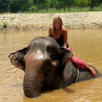 Olifanten verzorgen in Chiang Mai