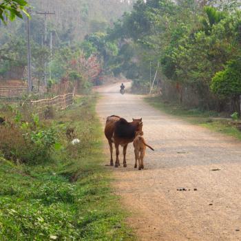 Typisch Laotiaans dorpje