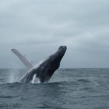 Walvissenshow bij Puerto Lopez