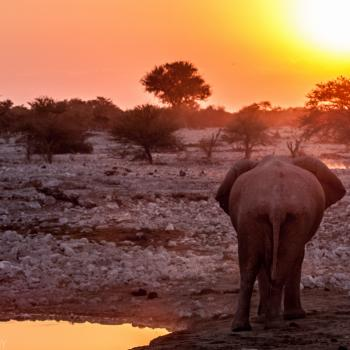 Olifant bij ondergaande zon in Etosha National Park
