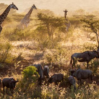 Het Afrika-gevoel!