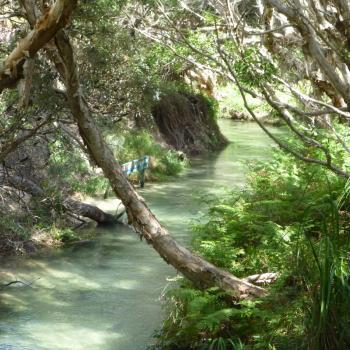 Eli Creek op Fraser Island