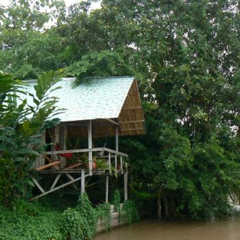 Jungle life rondom San Carlos