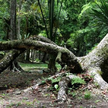 De jungle rondom de Tempels in Tikal