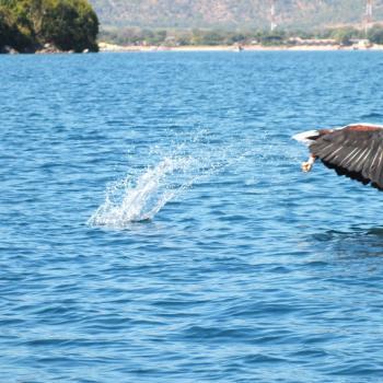 bij lake malawi