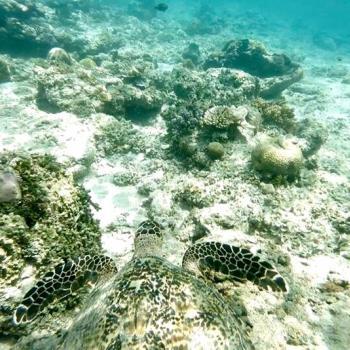 Gili Air wordt omgeven door schildpadden
