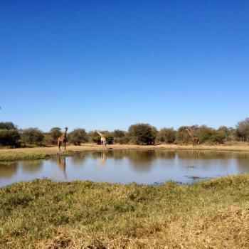 Het zoekplaatje in het Krugerpark