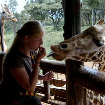 Giraffe wilt kussen!