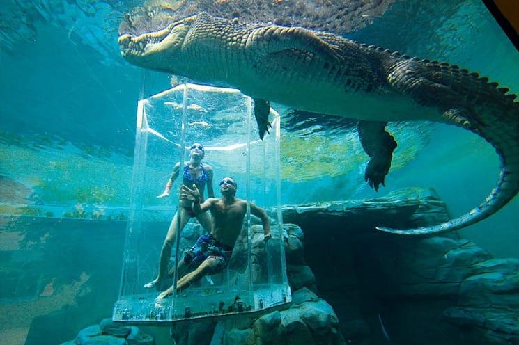 Crocosaurus Cove, Darwin, Australië