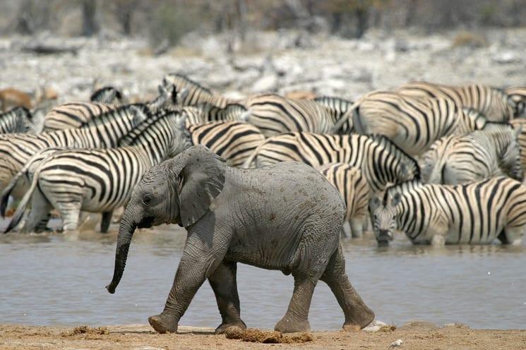 Nationaal Park Etosha