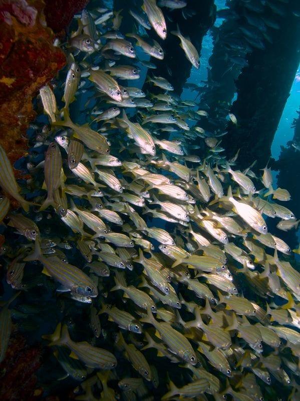 bonaire duiken