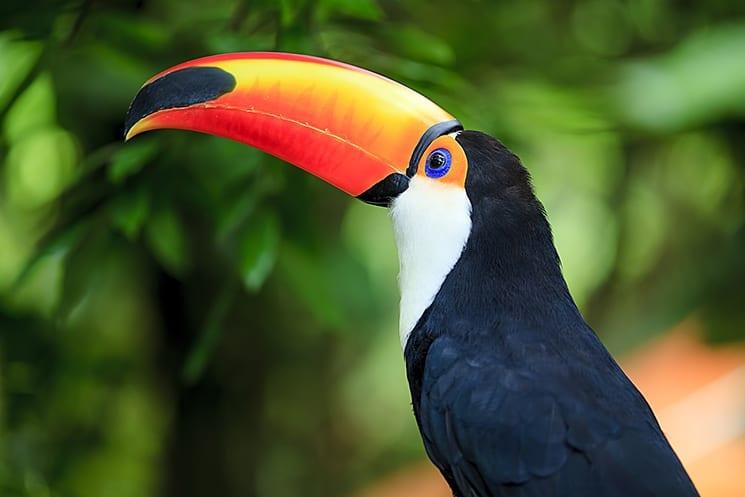 Amazone, Brazilië