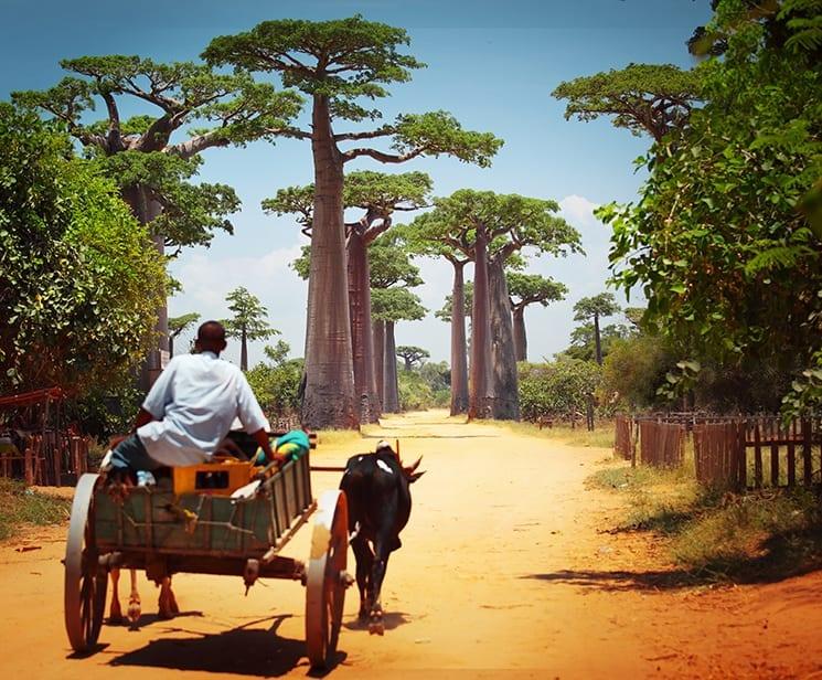 Vrijwilligerswerk Madagaskar