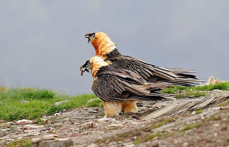 Vogels spotten in de Pyreneeën