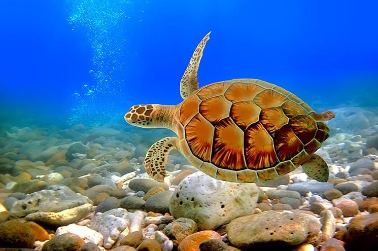 Duiken bij de Gili eilanden