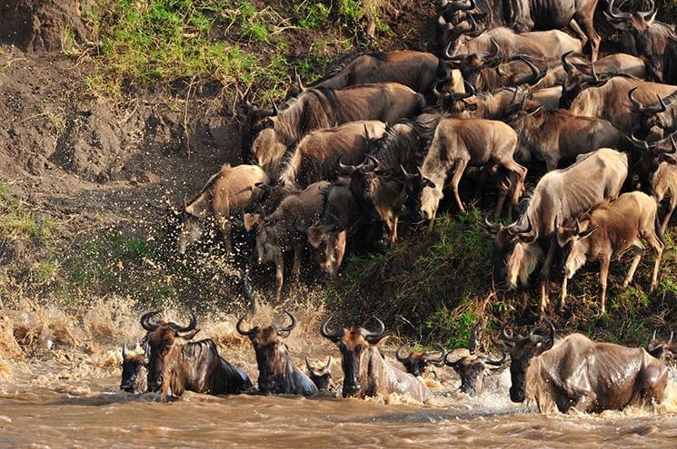 De Grote Migratie aanschouwen in de Serengeti