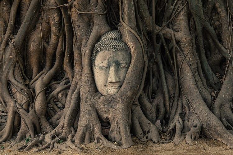 Het Boeddhahoofd in Wat Phra Mahathat