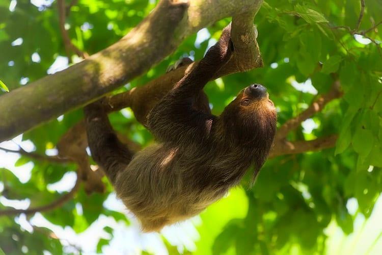 Manuel Antonio Nationaal Park wildlife