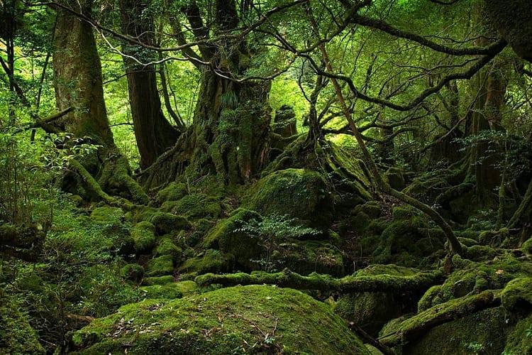 Aokigahara, Japan