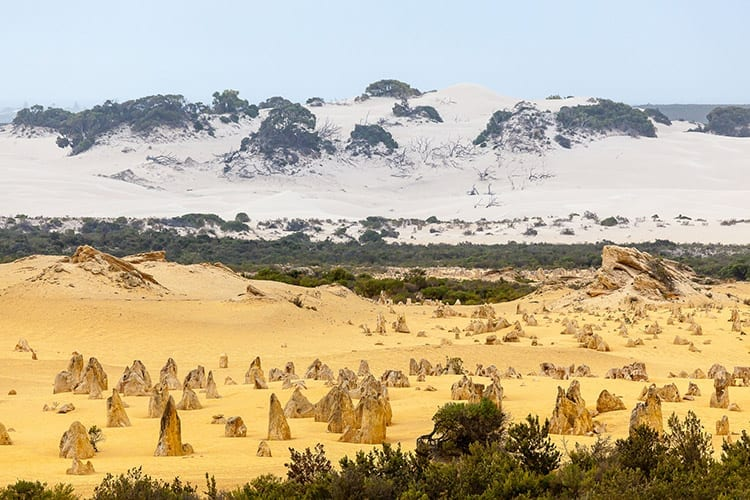 Pinnacles in het Nambung National Park