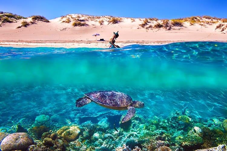 Ningaloo Reef, Australië