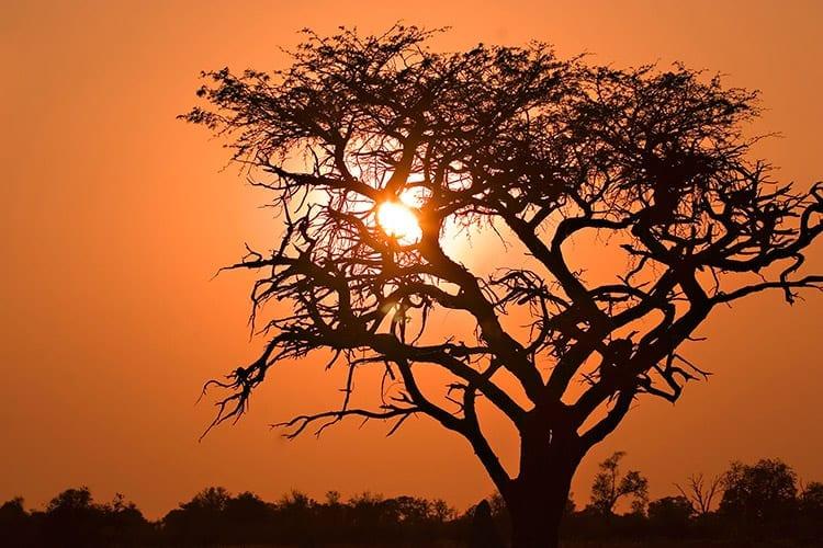 Moremi Game Reserve zonsopkomst