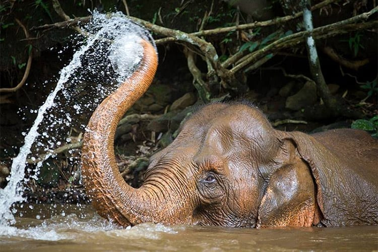 Mondulkiri Elephant Sanctuary