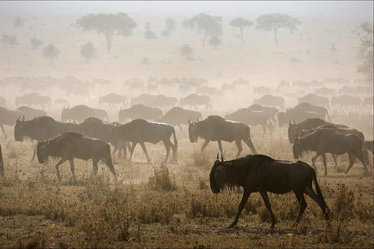 De Grote Trek in Tanzania