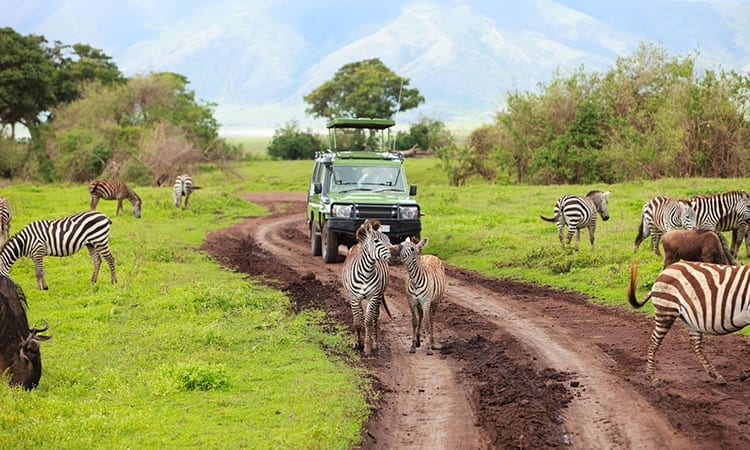 Ngorongoro Krater safari