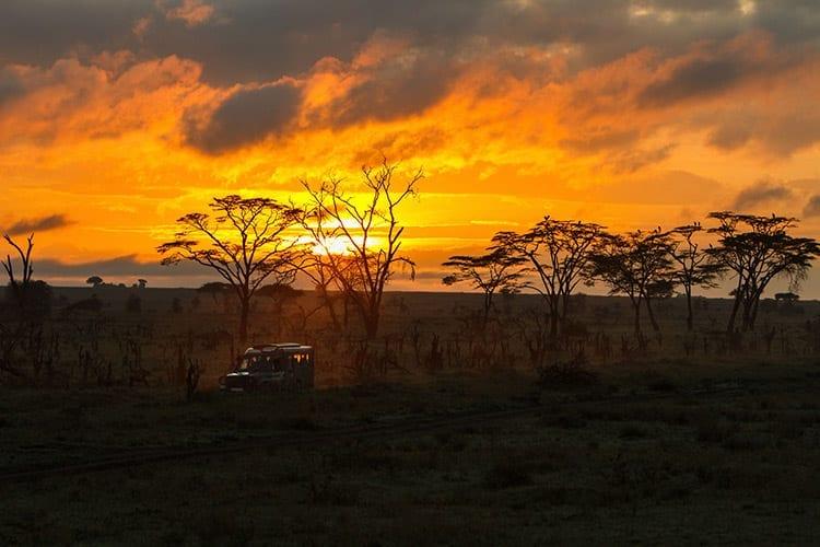 Safari in de Serengeti
