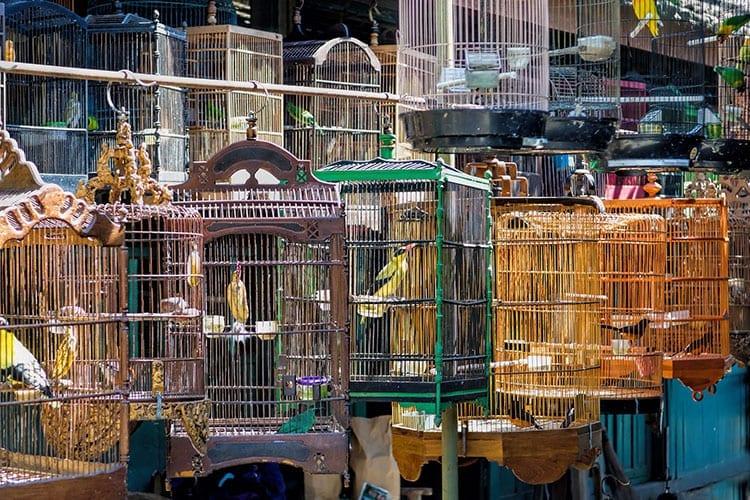 Yogyakarta's vogeltjesmarkt