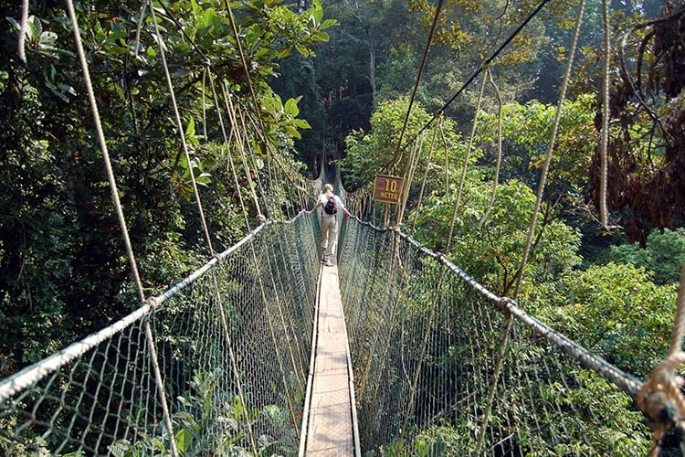 Canopy Walkway in het Taman Negara National Park
