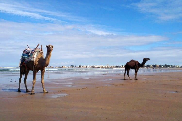 Strand bij Essaouira