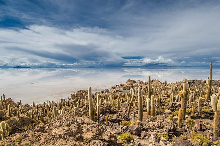 Het eiland Incahuasi in Salar de Uyuni