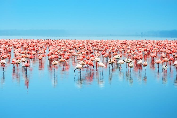 Lake Nakuru flamingo's