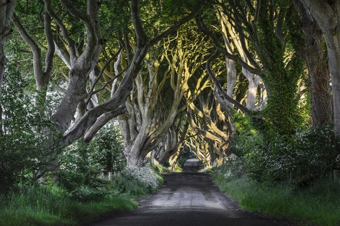 Dark Hedges, Noord-Ierland