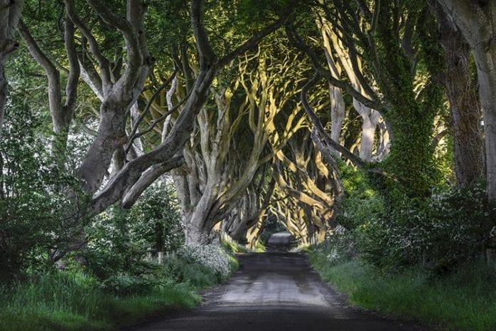 Dark Hedges, Noord-Ierland