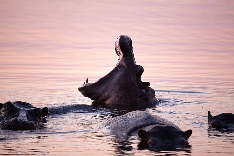 Lake Kariba wildlife